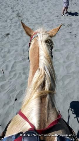 JoDee's horse