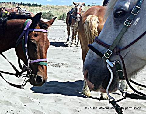 Tator (with purple harness) at Ocean Shores