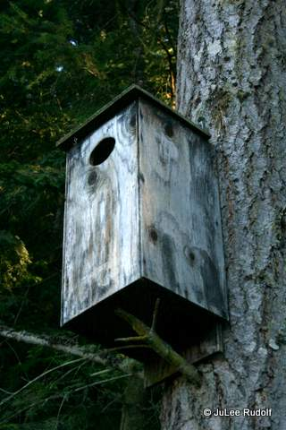 Bird house near Wetland Pond at Sharpe Park