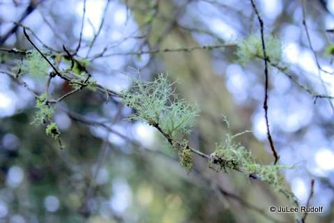 Lichen at JWSP