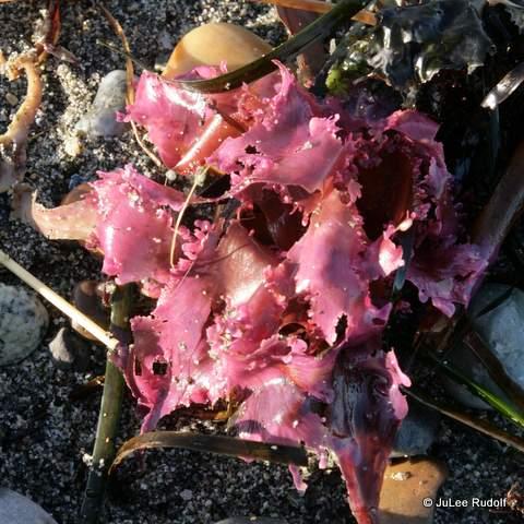 Seaweed at JWSP