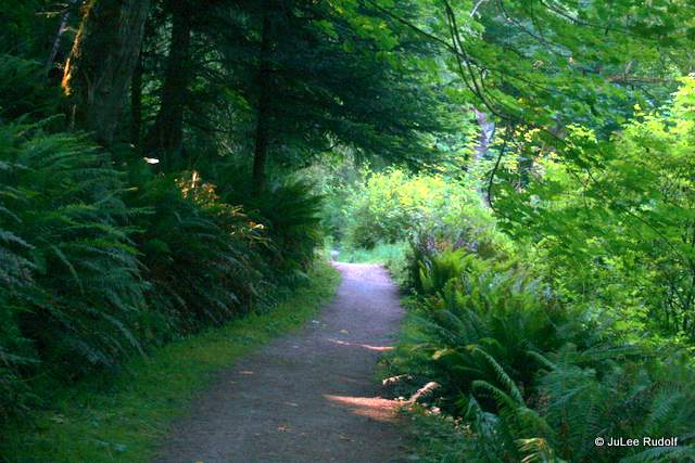 Beach trail at South Whidbey State Park