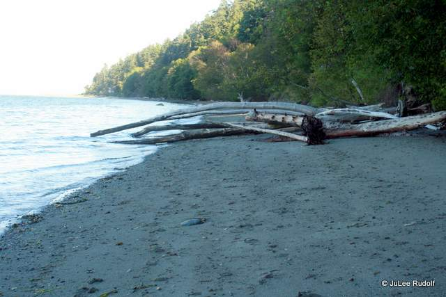 South Whidbey State Park beach