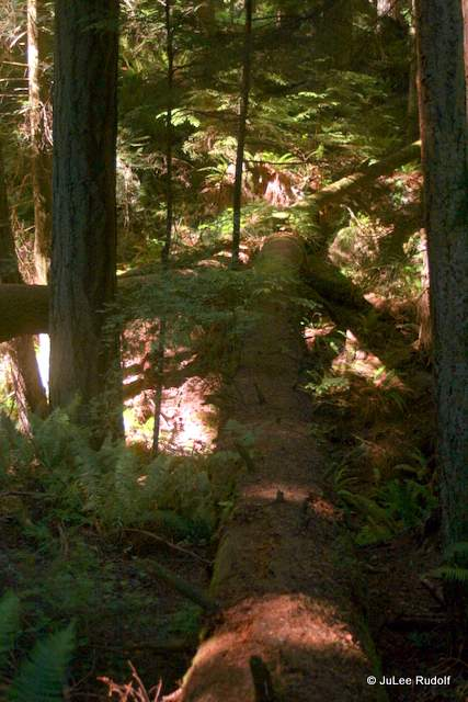 Ridge Loop Trail at South Whidbey State Park