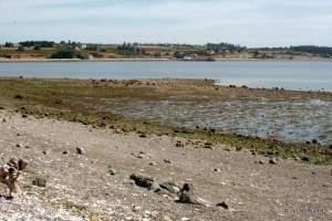 Mueller Park Beach
