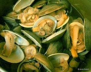 steamed Manila clams from Mueller Beach
