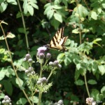Tursi Trail butterflies