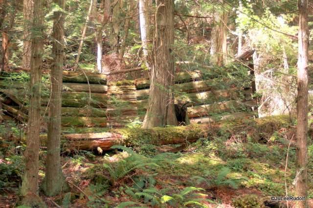 Tursi Trail miner's cabin