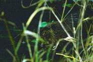 img_7847-beavers-1-19-2016-8-17-008