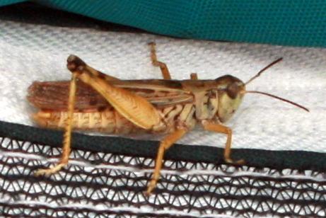 grasshopper 8-18-2017 10-37-26 AM