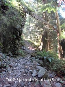 trail 247 east of heart lake rd 8-1-2009 1-07-37 AM