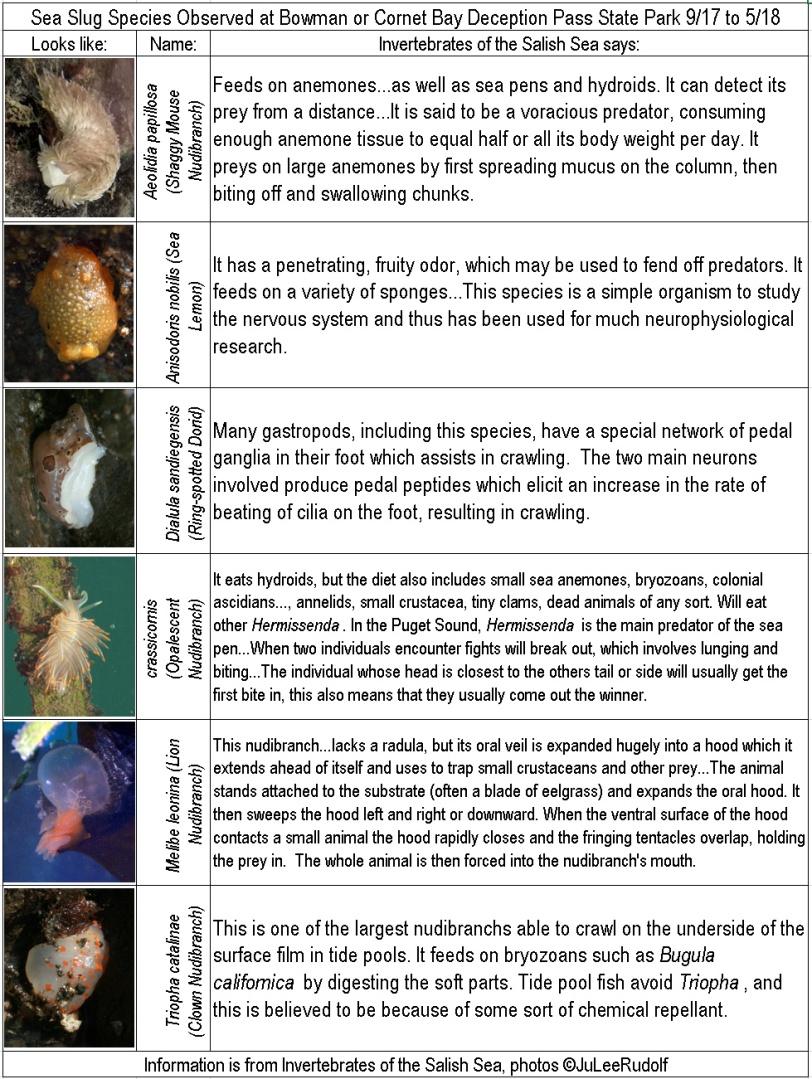 nudibranchs.bmp